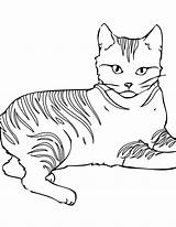Coloring Cat Warrior sketch template