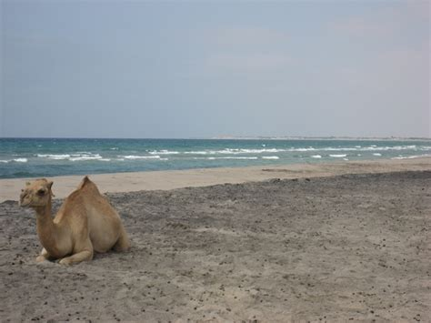 The Top 5 of the ugliest somali beaches (pics) - SomaliNet ...