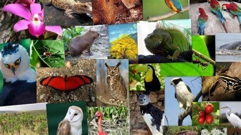 internacional de la diversidad biologica  de mayo