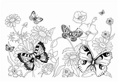 malvorlage schmetterling kostenlos  butterfly coloring