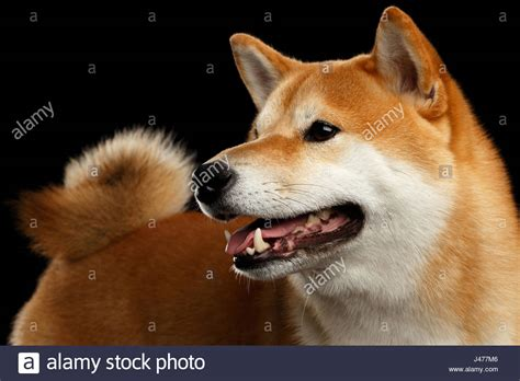 Dog Profile White Background Stock Photos & Dog Profile ...