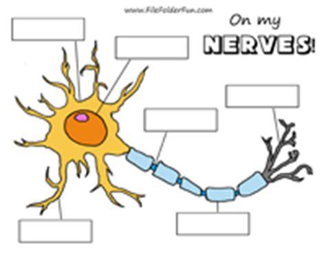 label parts of neuron worksheet homeschool