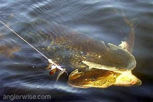 Giant Pike Caught Using Another Large Pike as Bait