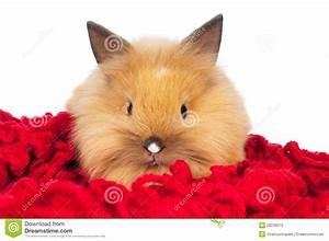 Cute Baby Rabbit Isolated Stock Photos - Image: 28236573