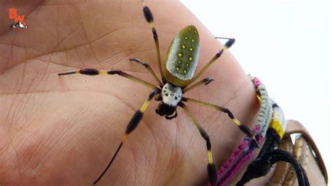 Coyote Peterson - WILL IT BITE?! - BIG CREEPY SPIDER ...