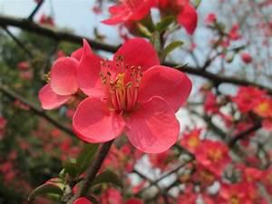 Planter Des Bulbes : planter des bulbes d 39 t nouvelles famiflora le plus ~ Dallasstarsshop.com Idées de Décoration