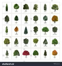 thirty different vector tree illustrations tree types sorts specimens arborvitae european