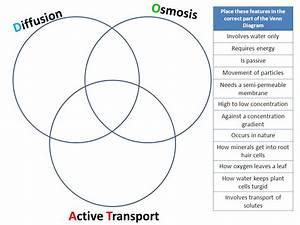 34 Active And Passive Transport Venn Diagram