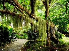 Green Forest Wallpapers And Images  Wallpapers, Pictures