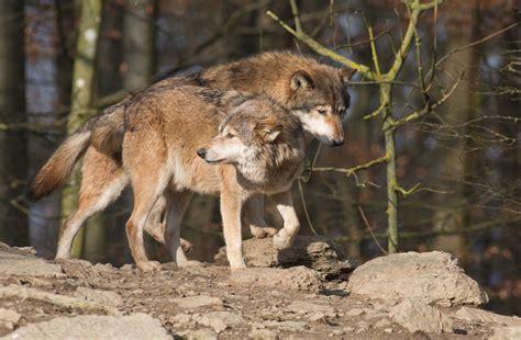 Sie Mögen Sich Foto & Bild  Tiere, Fotos, Wald Bilder Auf