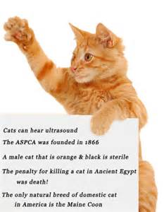 tabby cat facts the orange tabby cat facts pets