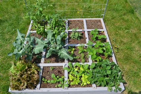 Square Foot Gardening by My Square Foot Garden Follow The Progress Of My Square