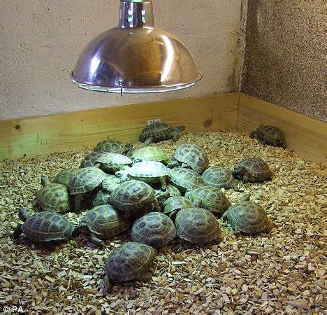 internet tortoise seller sentenced for animal cruelty