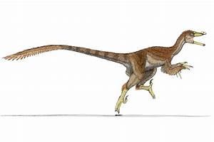 UWL Website  Velociraptor