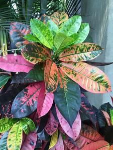 Zimmerpflanze Große Blätter : sch ne zimmerpflanzen frische ideen f r die dekoration im ~ Lizthompson.info Haus und Dekorationen
