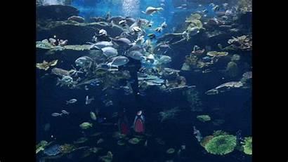 Sea Ocean Bangkok Aquarium Underwater Adventure Guide
