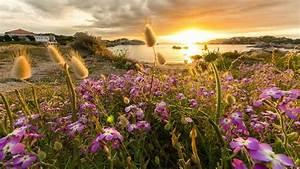 purple, flowers, field, sunrays, background, reflection, on