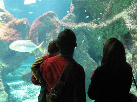 tourisme aquarium de la rochelle tourisme en charente maritime vacances royan cing le