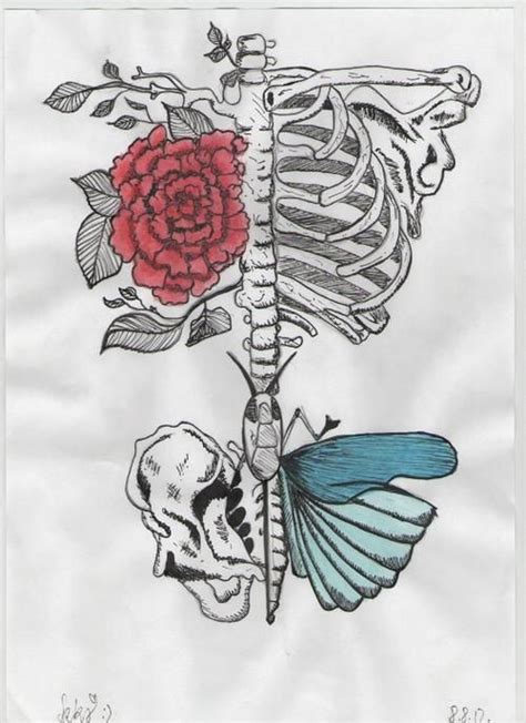 Butterfly Draw Drawing Flower Pencil Rose Skeleton