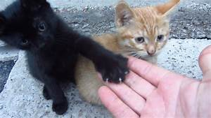 Kittens Live Under A Concrete Slab FunnyCatTV
