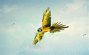 born to fly wallpapers hd wallpapers id 13343