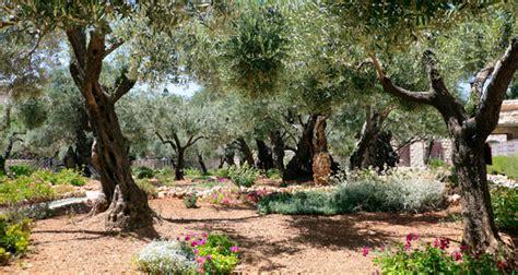 garden of gethsemane tcc reads jesus a pilgrimage by martin sj the