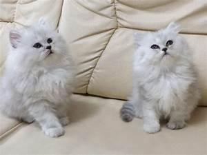 Läuse Natürlich Bekämpfen : die besten 25 katzen fl he ideen auf pinterest ~ Whattoseeinmadrid.com Haus und Dekorationen