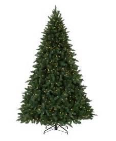 austrian spruce tree tree classics