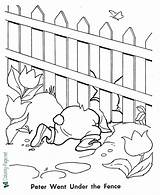 Coloring Rabbit Peter Fence Under sketch template