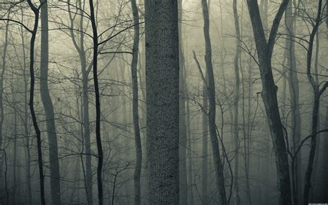 Fall Backgrounds Spooky by Nature Trees Forests Woods Trunk Fog Mist Bark