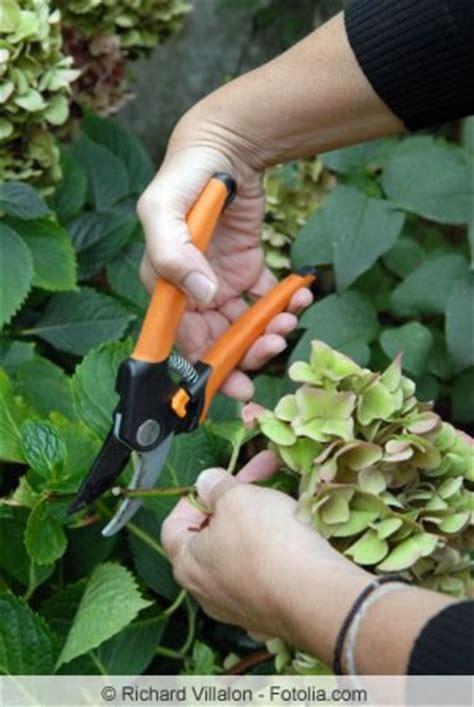 wann werden hortensien geschnitten anleitung hortensien schneiden fr 252 hjahr oder herbst