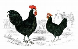 Hen & Rooster promo codes
