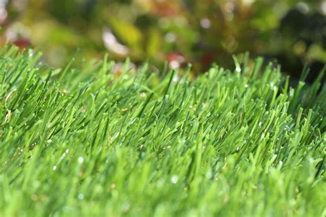 buy grass top 28 buy grass grass by xwattepoppl on deviantart buy nomow classic meadow artificial