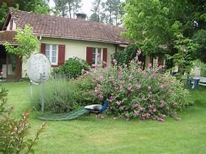 Tiere Im Garten Begraben : tierbestattung im wald wir begraben die asch in tiere ~ Lizthompson.info Haus und Dekorationen
