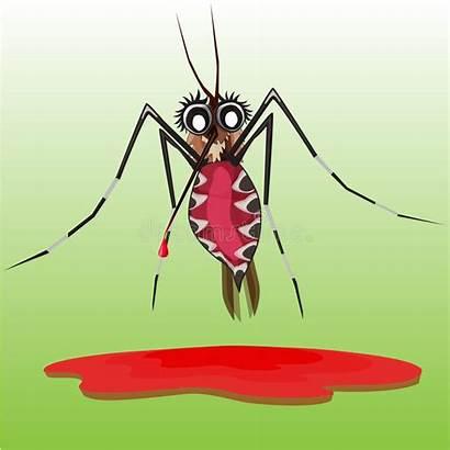Mosquito Dead Cartoon Common Illustrations Vectors