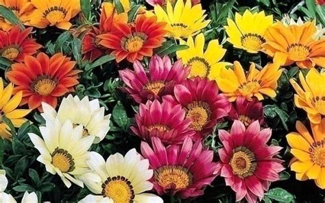 all season flower plants working with seasonal products all year long by getentrepreneurial com