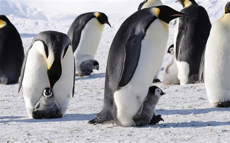 penguin wallpaper hd  page