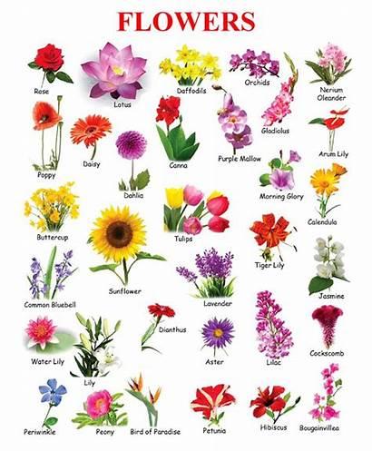 Flowers Names Flower Types Chart English Google