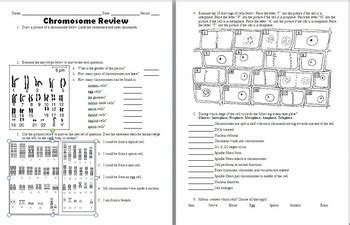 Chromosome, Mitosis, And Karyotype Analysis Worksheet By Beverly Biology