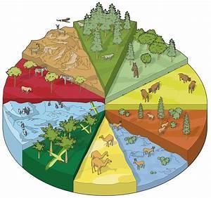 Land Habitats | Different Habitat Types | DK Find Out