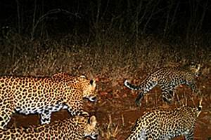 Animals in the Vhembe Biosphere Reserve