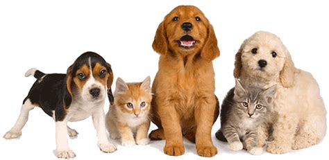 Pet Friendly Drug Rehab  Bring Your Pet To Treatment