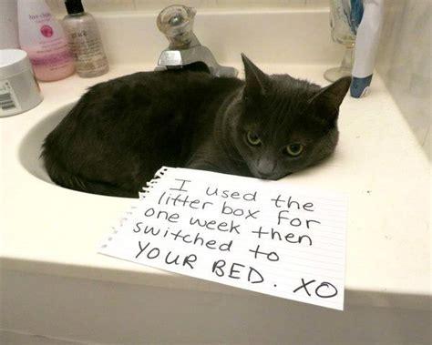 pet cat shaming funny bad runt web pets sign ever shamings
