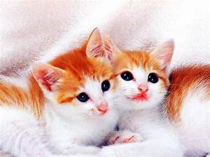 Very Cute Cat Wallpaper Hd   Cat Wallpaper