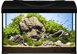 Komplett Aquarium Kaufen : diversa aquarium 50er komplett set 50x25x30 cm rechteck schwarz ~ Eleganceandgraceweddings.com Haus und Dekorationen