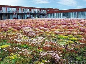 Pflanzen Zur Luftbefeuchtung : dachdeckerei wendt gmbh neum nster ~ Sanjose-hotels-ca.com Haus und Dekorationen