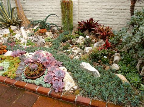 succulent garden bed reader photos a gem of a succulent garden fine gardening