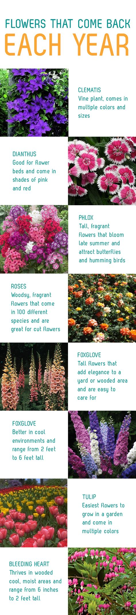 list of flowers that come back every year flowers that come back each year sunny slide up