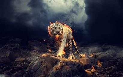 Widescreen Tiger 1080p Wallpapers Title