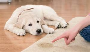 how to potty train your puppy ferndog training With the dog house training